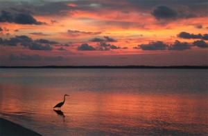 pensacola beach with bird