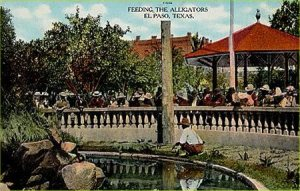 Feeding the alligators in 1909