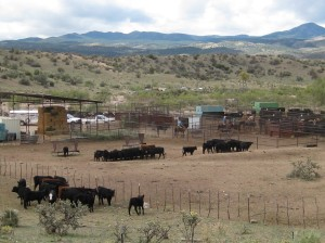 A cattle ranch in New Mexico on the way to Silver City