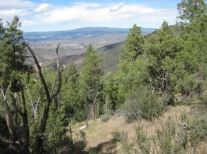 Vista in the Gila Wilderness