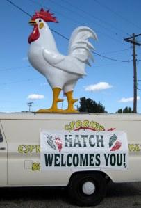 Hatch chicken welcome