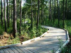 Nature trail in the Big Thicket National Preserve